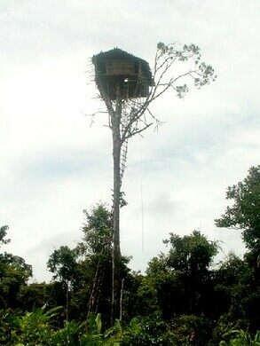 Korowai Tree Houses Kia Indonesia Atlas Obscura