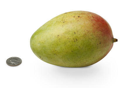 BB is now roughly the size of a large mango - babycenter.com