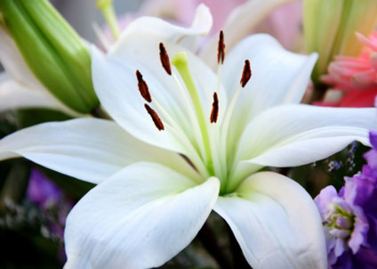 Top 10 flower names  photos   BabyCentre UK Lily
