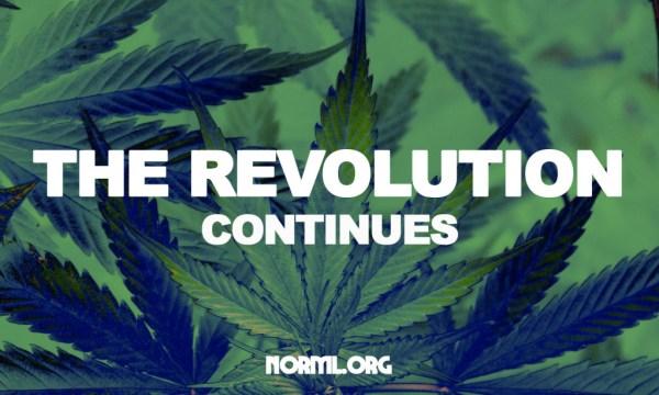 revolutionbumper