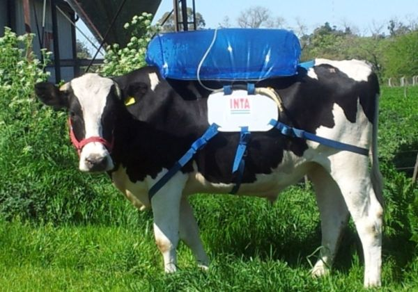 Image result for cow methane