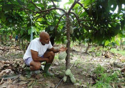 Indranil Ghosh on a cocoa plantation in Kotokonou.