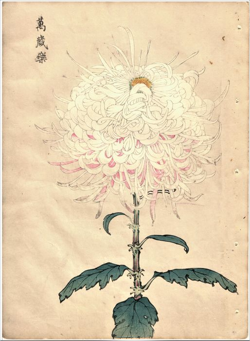 "Original woodblock print - Keika Hasegawa (act. 1893-1905) - Uit de serie ""One Hundred Chrysanthemums"" - 1893 - Japan - Catawiki"