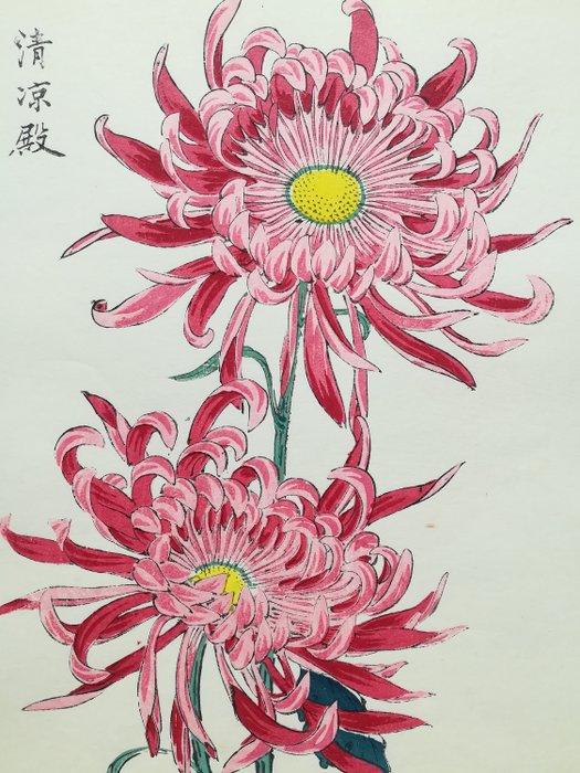 "Original woodblock print - Keika Hasegawa (act. 1893-1905) - Chrysanthemum Flower - From the series ""One Hundred Chrysanthemums by Keika"" - Japan - 1893"