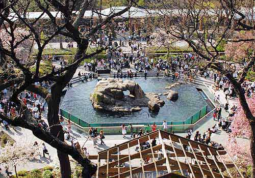 Image result for central park zoo