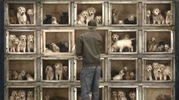 Multiple puppies in small cages stacked up four high and five across.