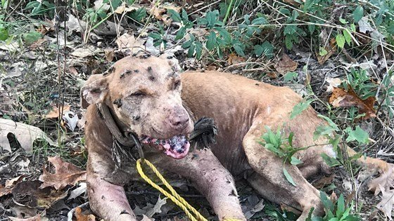 Image result for dogs after a dog fight