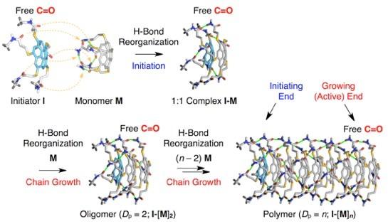 超分子ポリマーの精密合成[18]