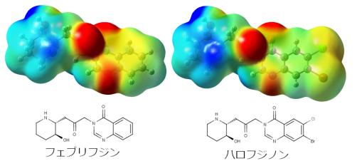 フェブリフジンとハロフジノンの静電ポテンシャルマップ(赤~黄が電子豊富・青~緑が電子欠乏)