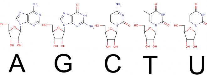 核酸塩基は4つだけではない | Ch...