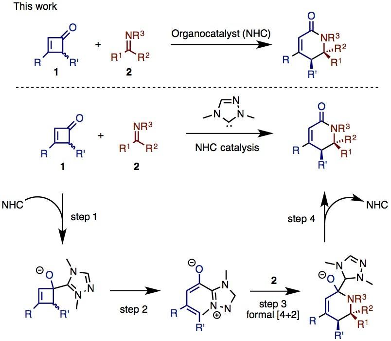 図3 ChiらのNHC触媒を用いるC–C結合活性化(出典:論文より改変)