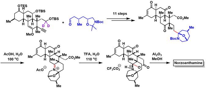 norzoanthamine_12