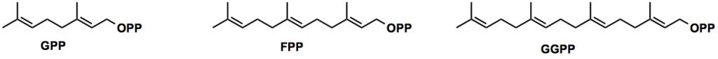 Lycosantalonol_GPP