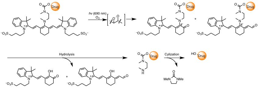図2 光分解性シアニン色素の分解機構