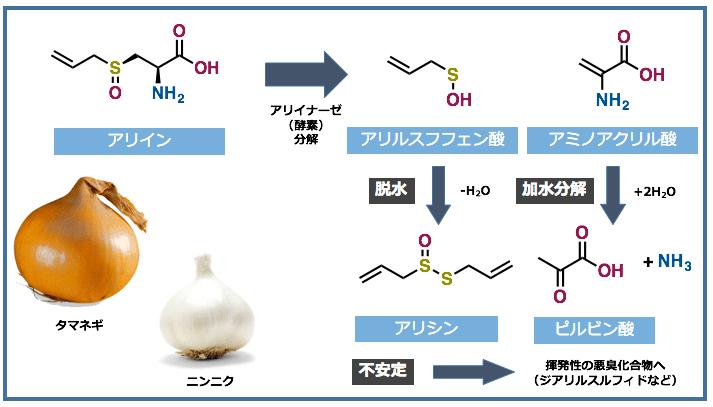 硫黄 Sulfurーニンニク、タマネ...