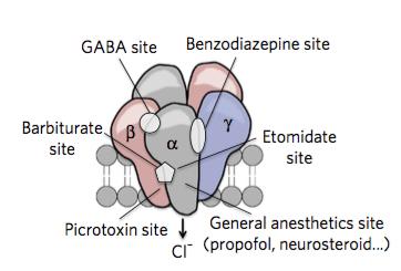 GABAA受容体