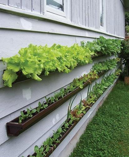 Below: Suzanne Forsling's windowbox garden after two months.