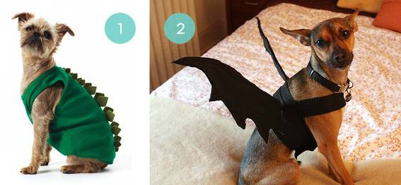 10 DIY Halloween Costumes For Your Pet