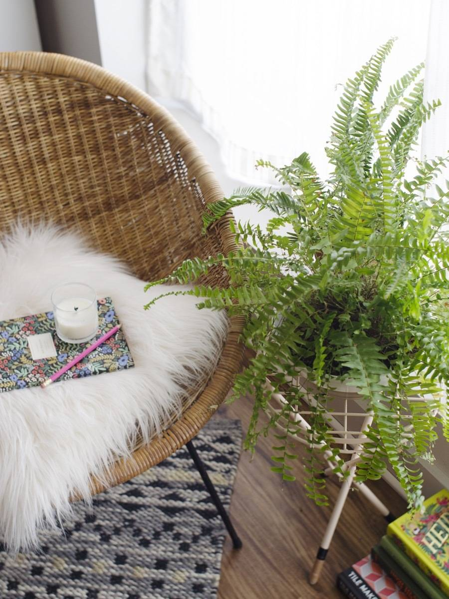 Pet-friendly Houseplants: Fern-tastic and non-toxic to pets!