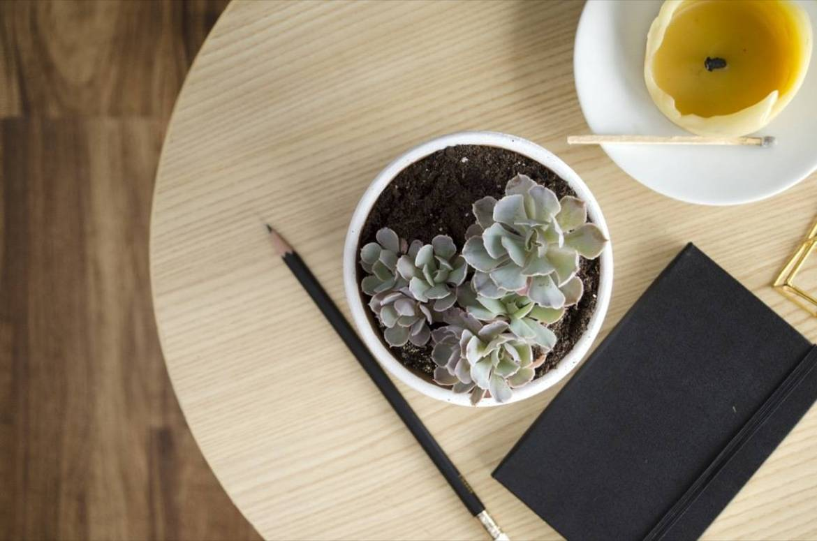 Grow as many succulent plants as you want through the power of propagation!