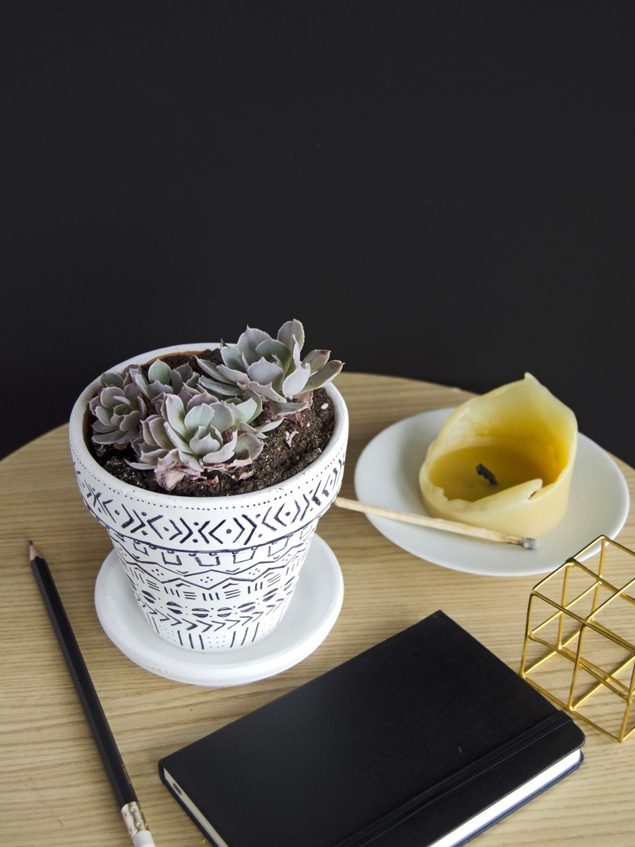 How To Regrow Succulents | A Walkthrough