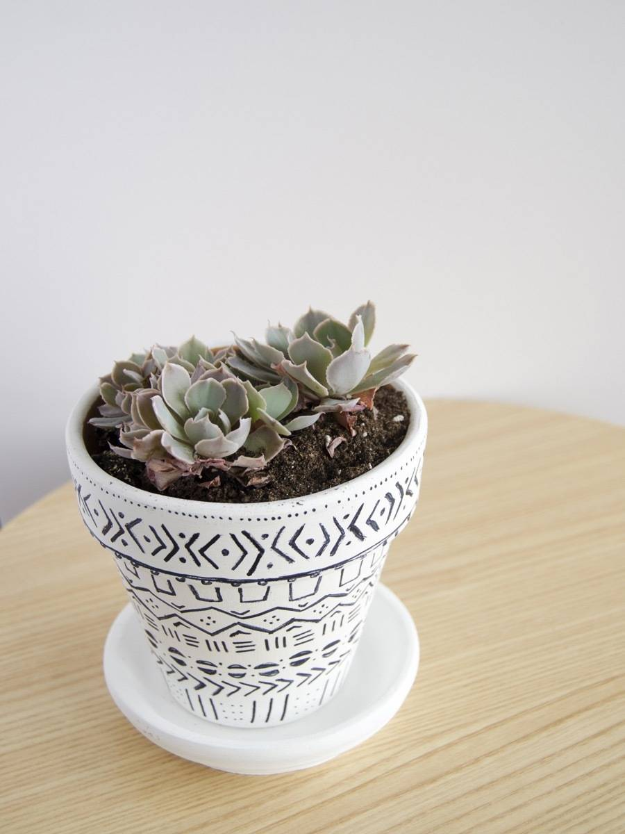 How to regrow succulent plants | Step 7: Patience