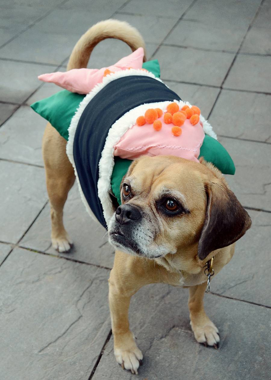 DIY Sushi Halloween Costume For Your Dog