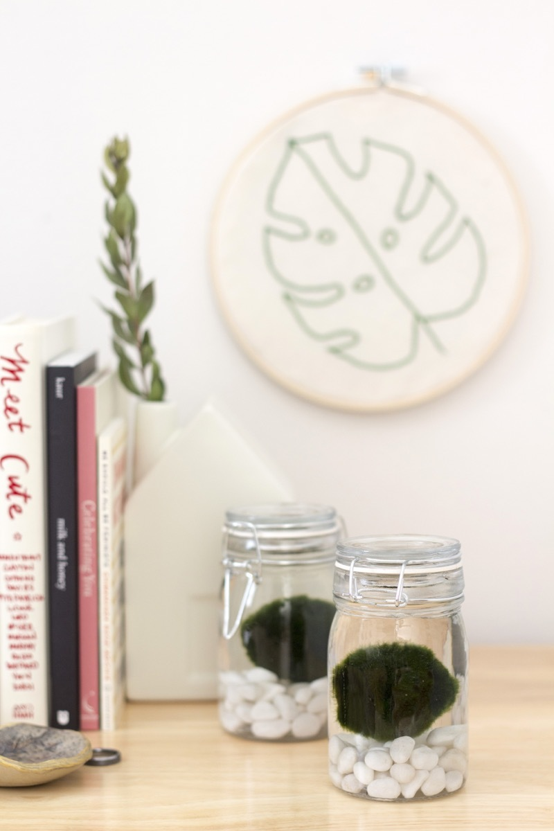 Move over, Air Plants. You've got competition. (Marimo Moss Balls 101)