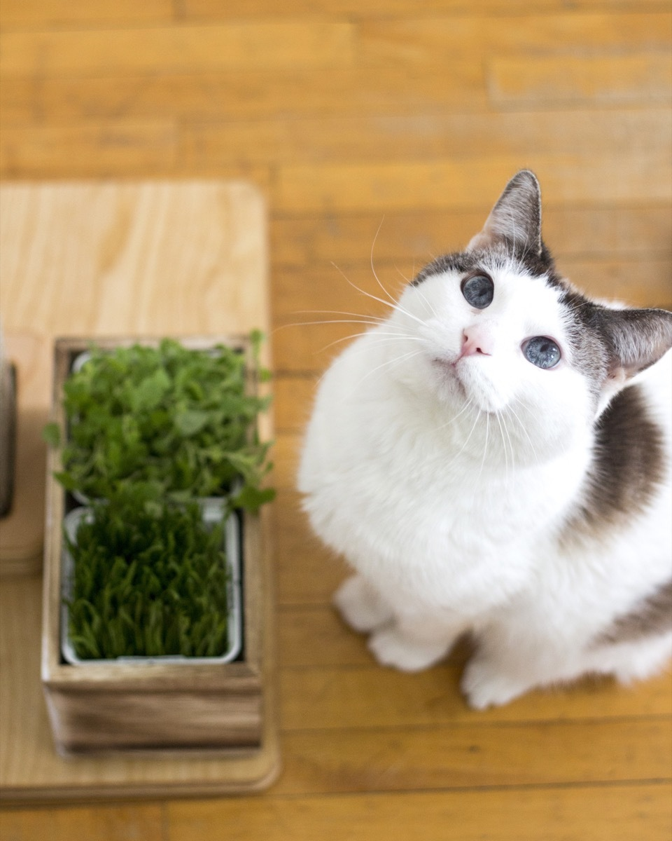 How to make an indoor garden for you feline friend