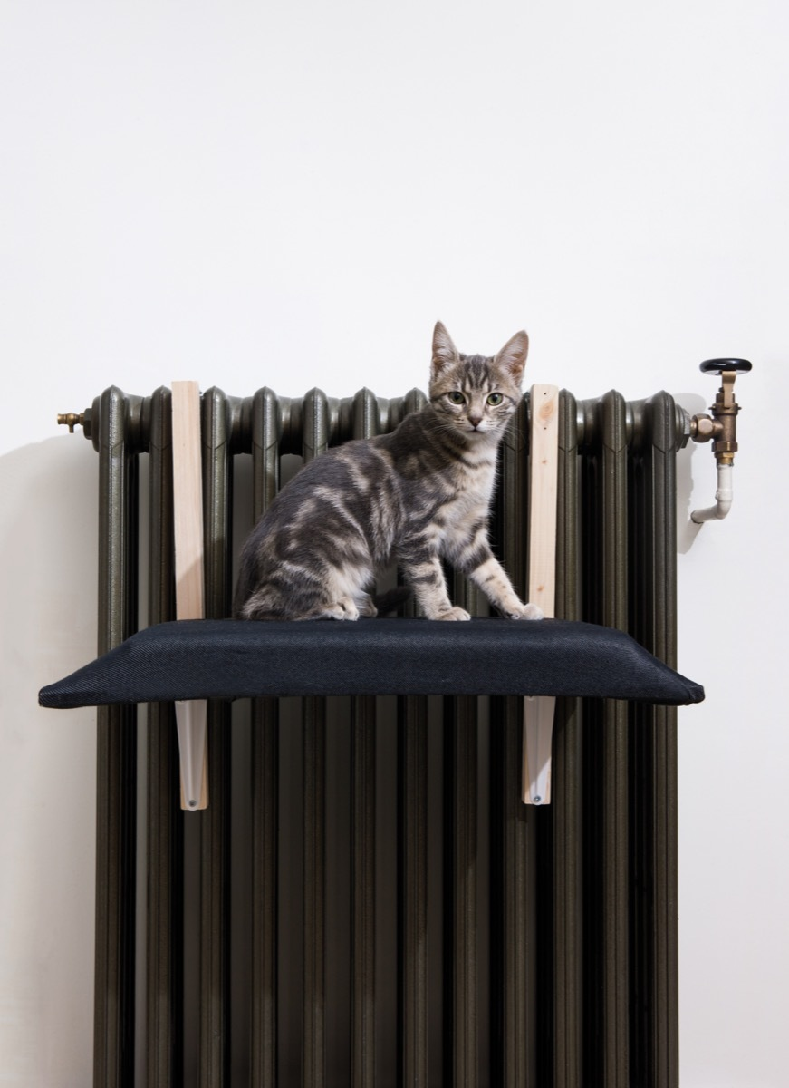 """From the new book, """"DIY Projects for Cats & Dogs."""" A tutorial on how to make a radiator cat bed."""