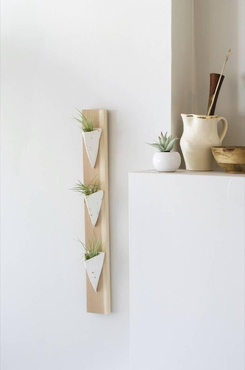 Completed DIY project: Wall-mounted air plant holder