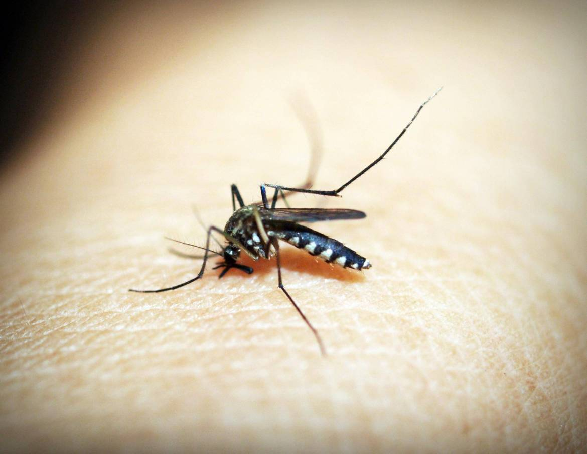 Use dryer sheets as a mosquito repellant