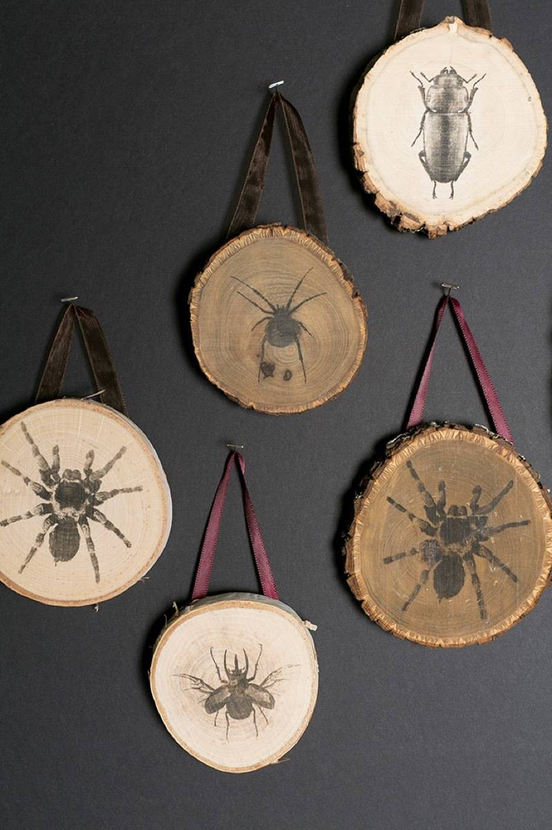 Wood rounds with insect tranfers