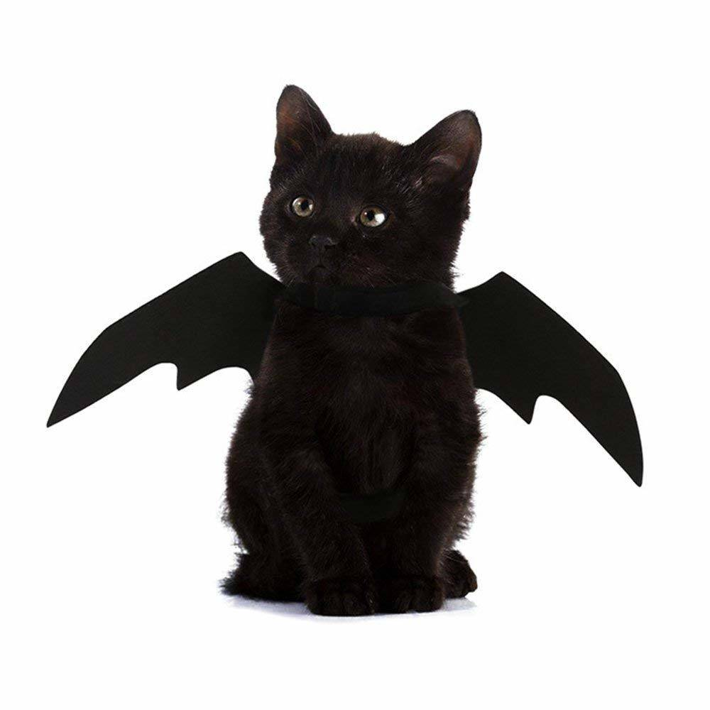 Pet Halloween costume featuring cat bat wings