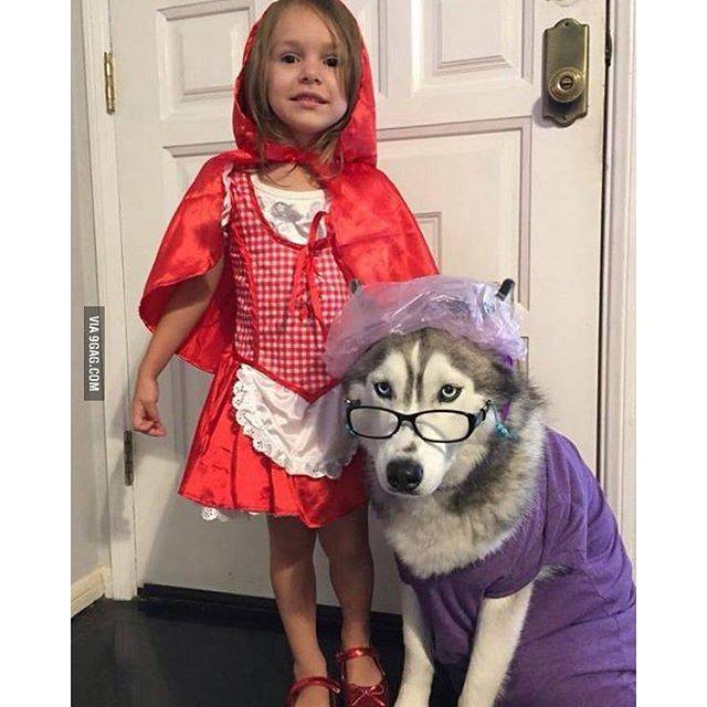 Halloween pet costume: Dog as Big, Bad Wolf with Little Red Riding Hood