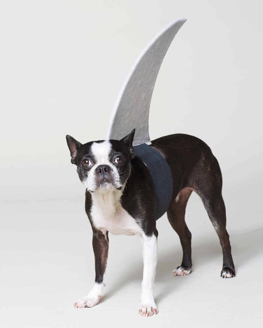 Shark Halloween dog costume
