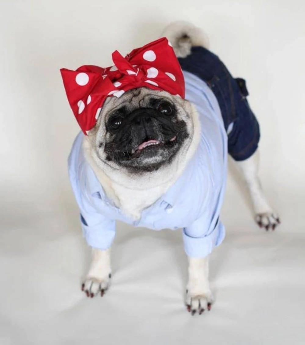 Halloween Rosie the Riveter dog costume