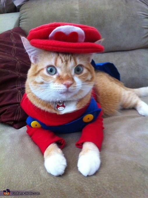 Halloween Super Mario cat costume