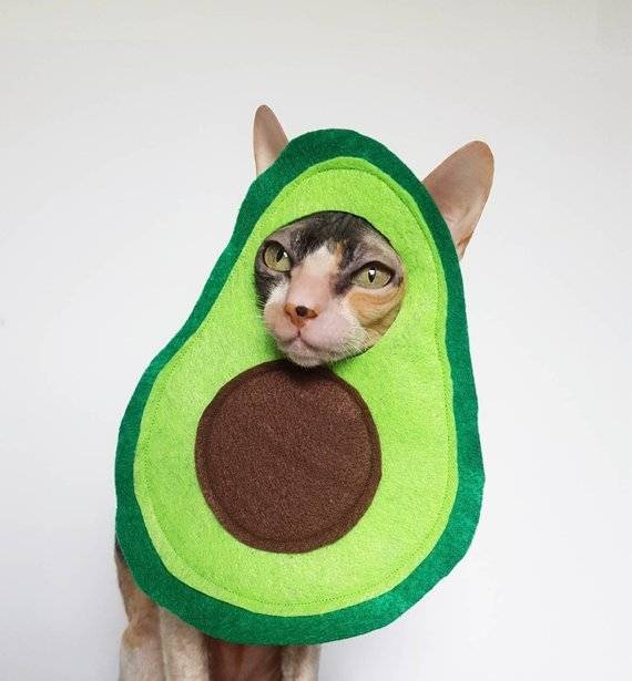 Halloween avocado cat costume