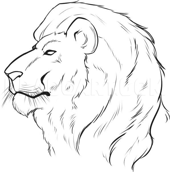 How To Draw A Lion Face Step By Step Drawing Guide By Dawn Dragoart Com