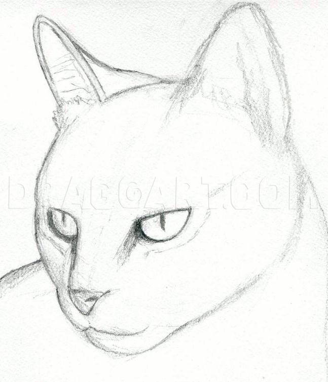 How To Draw A Cat Head Draw A Realistic Cat Step By Step Drawing Guide By Finalprodigy Dragoart Com