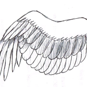 How To Draw A Wing Step By Step Drawing Guide By Dawn Dragoart Com