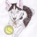 Husky Puppy Drawing By Jellybean828 Dragoart Com
