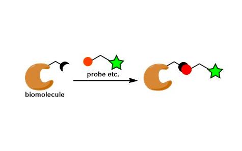 Bioconjugation
