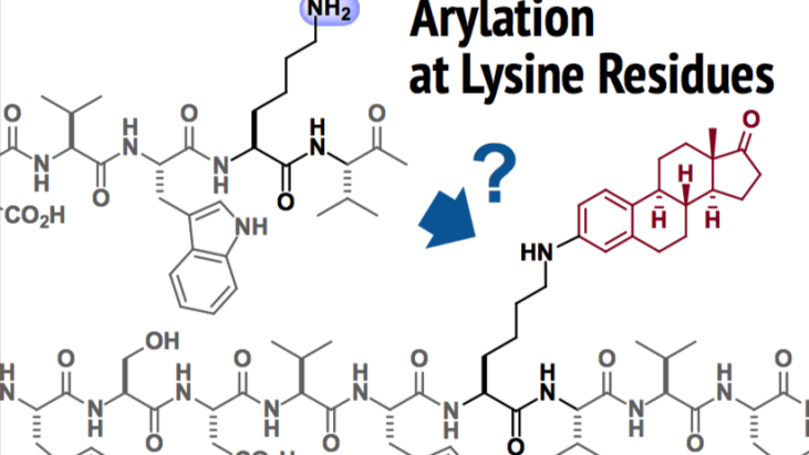Arylation at Lysine Residues