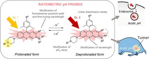 Development of a Series of Practical Fluorescent Chemical Tools To Measure pH Values in Living Samples