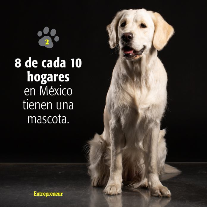 1534529299 Mascotas Instagram3 What You Need To Know To Open An 'Everything For Your Dog' Store