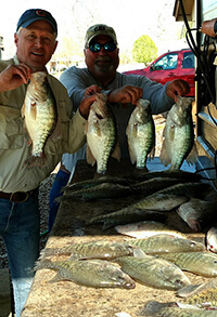 Grenada Lake, MS Crappie
