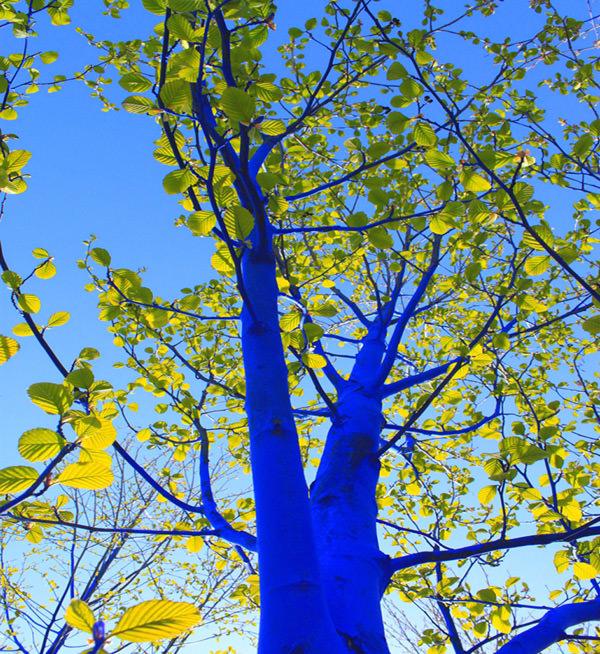синее дерево