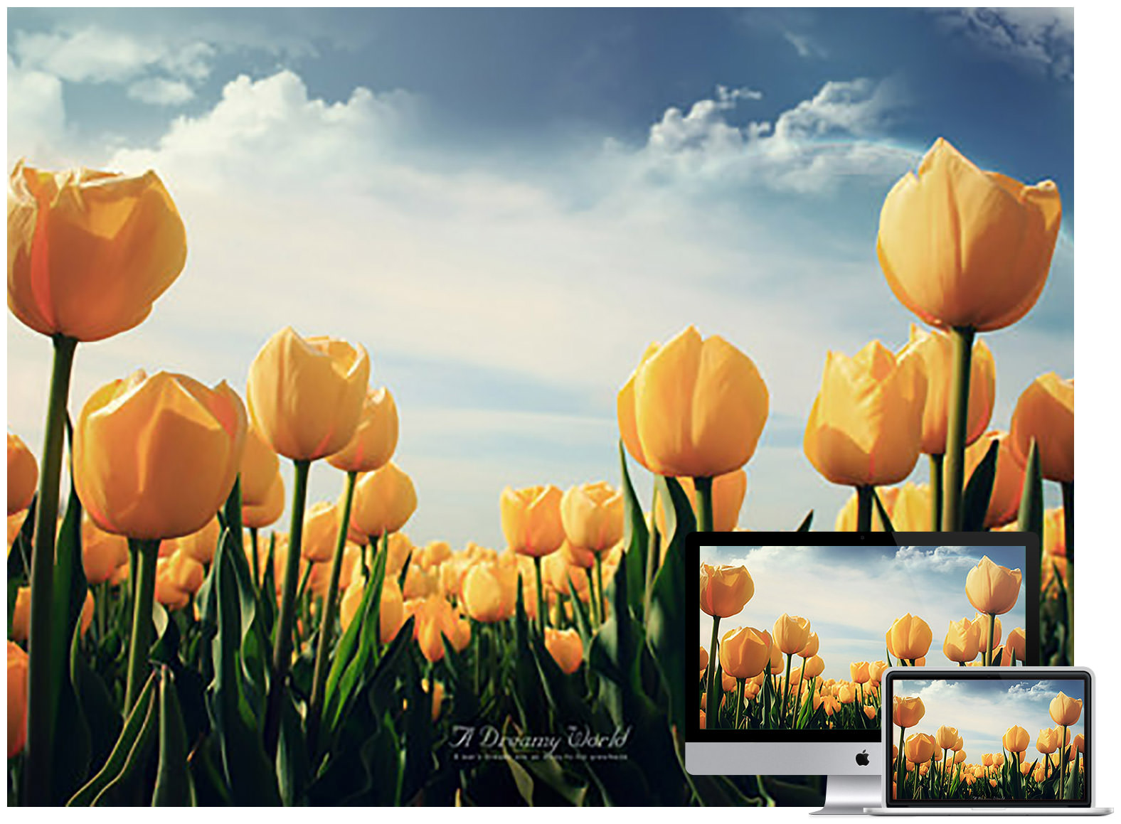 60 Beautiful Flowers Wallpapers To Download Hongkiat